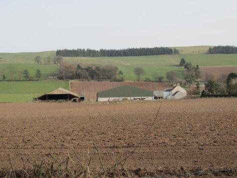 East Nevay Hill behind East Nevay farm