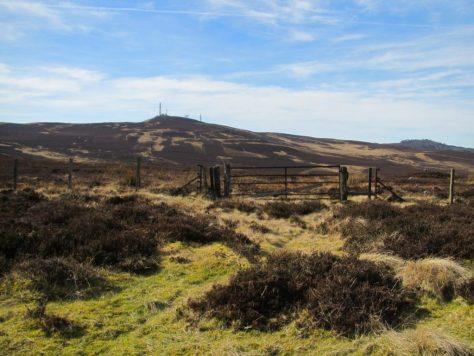 Craigowl and Auchterhouse Hill from below Gallow Hill