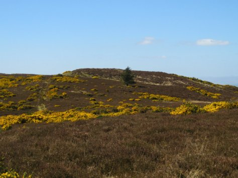 Auchtertyre Hill from Newtyle Hill