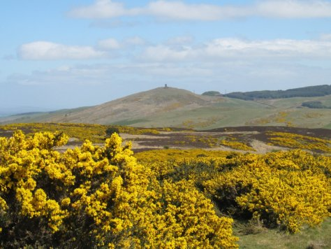 Kinpurney Hill from Donald's Brae