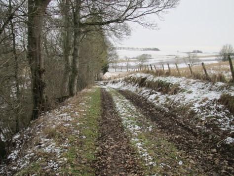 Track through Whitehill Den
