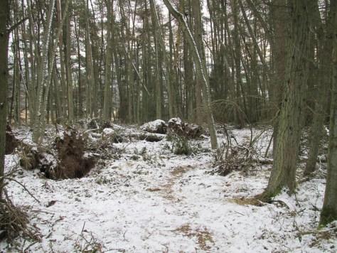 Path on Kirkton Hill