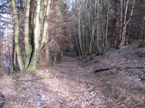 Forest track in Rossie woods