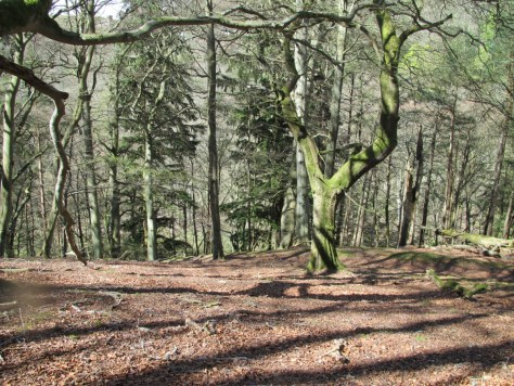 Woodland on Pawns Hill