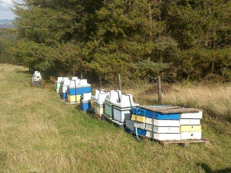 Beehives, Lomond Hills