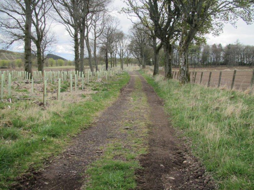 Farm track returning the Thriepley
