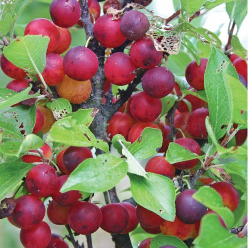 Products  OIKOS Tree Crops