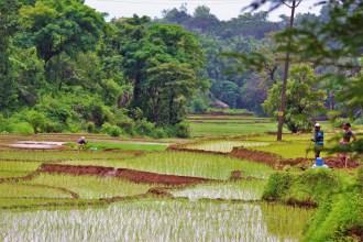 DUDHSAGAR PLANTATION – A HOMESTAY HIDDEN AWAY FROM GOA'S BEACHES