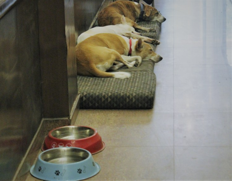 Stops Hostel's pet dogs - Ginger, Gennie & Pepper nap next to their feeding bowls.
