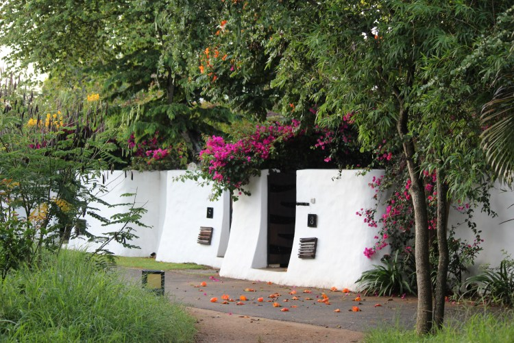 Butea flowers (palash) and bougainvilleas lie scattered outside my cottage - Serai's floral greeting in the morning?