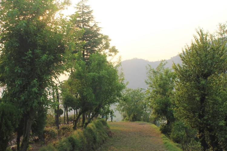 New Tehri is still miles away from the lake (Tehri Lake)