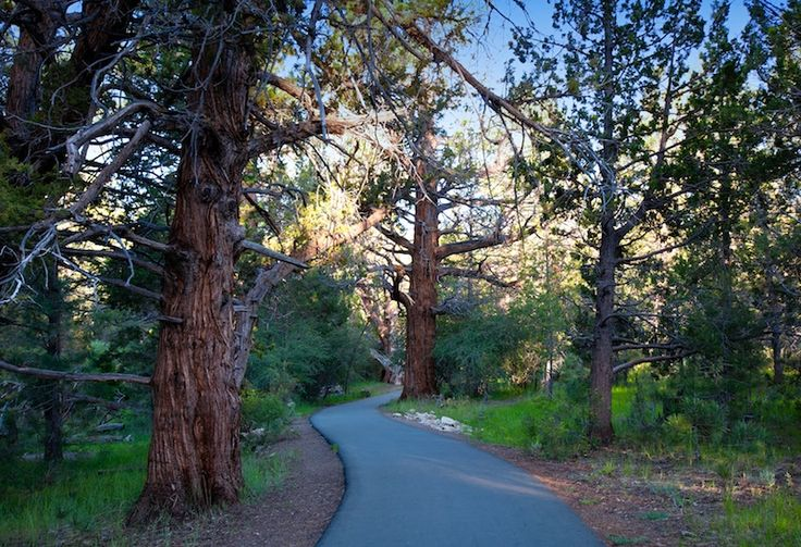 Alpine Pedal Path (Courtesy: Big Bear Cool Cabins)