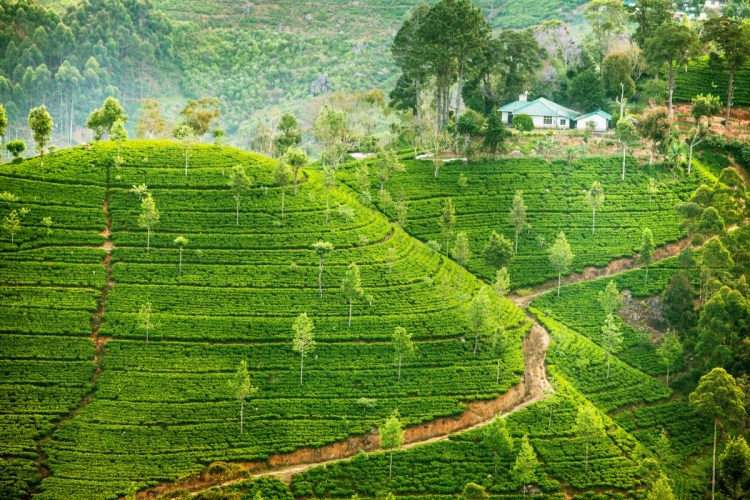 Revive the romance in your relationship in the tea gardens of Darjeeling