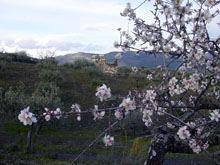 Primavera antecipada em Figueira e Foz Côa