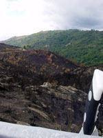 Mais fogos e área ardida no final de Julho