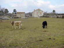 Agricultura e pecuária da região «seriamente comprometidas» pela seca