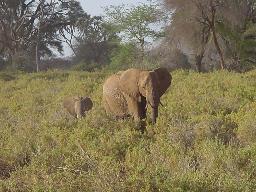 wpid-elephant.jpg