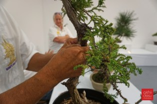 Dennis Makishima isn't a noob when it comes to bonsai.
