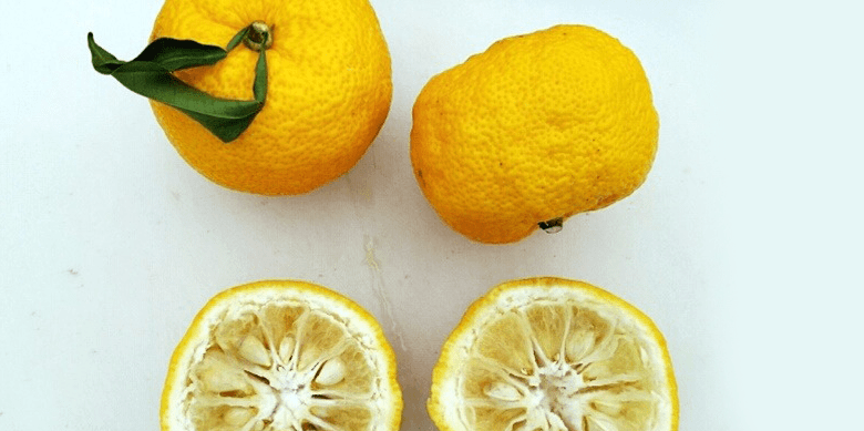 Photo Description: three yuzu citrus fruit . Two are whole while the other one is cut in half to show the inside of the fruit which contains large seeds. The yuzu citrus is probably one of the most common types of citrus used in ponzu which is also one of the most popular of the Japanese condiments.