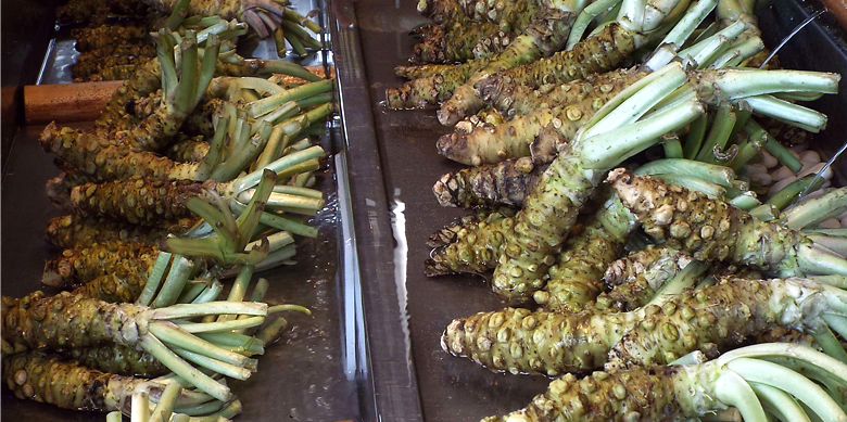 Photo Description: fresh wasabi roots are shown most likely at a market for sale. The roots have a number of stubs on it with what looked like where the leaves were (like a rhubarb).
