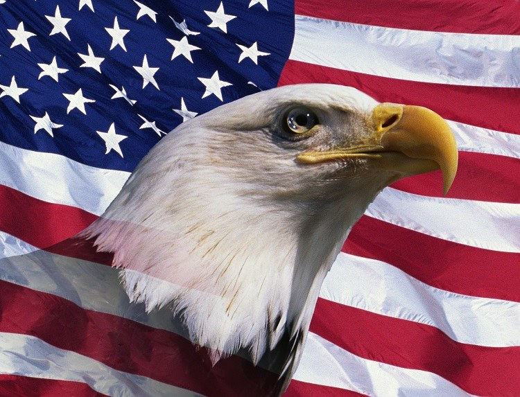 Photo Description: bald eagles head against the American flag in the background.