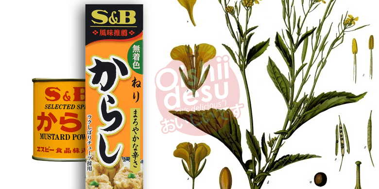 Photo Description:when it comes to Japanese condiments, S&B is one of the most common brands which is what is depicted here. The packaging for the karashi mustard is orangish in color with the mustard green plant or brassica juncea depicted in the background.