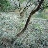 雄蛇ヶ池、藪刈取り作業後のおかっぱりポイントの状況