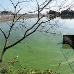 雄蛇ヶ池10/27リザードクローラーで2本。減水70cm弱アオコが酷い