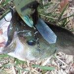 雄蛇ヶ池3/26アベンタクローラーで50UP。水位満水、水温9度
