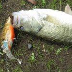 雄蛇ヶ池8/10の状況。水位微増、濁り増加