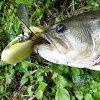 NZクローラー実釣インプレ!強アピールなデプスの羽根モノ。チューニングと使い方