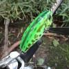ジャッカル「ポンパドール」実釣インプレ!使いやすく巻いてて楽しい羽根モノルアーの使い方