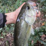 雄蛇ヶ池10/18アオコにターンオーバーがプラスされて濁り強め。巻いて2本