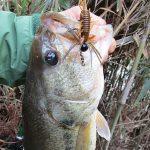 雄蛇ヶ池4/21水位マイナス10cm、スポーニング中。モッサの沈み虫で3バイト、2フィッシュ