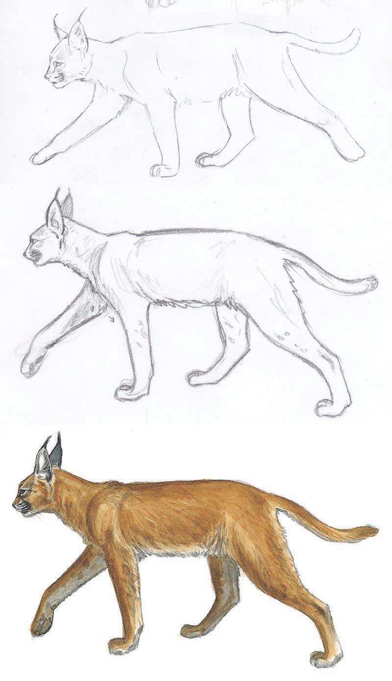 Ilustraciones y sus bocetos ll  Naturaleza a lpiz y pincel