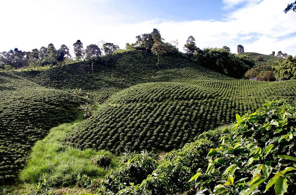 22% del café plantado en Costa Rica es bajo en emisiones