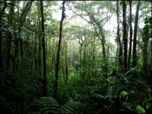 Los bosques maduros oocupan el 31% del territorio y un 18% en bosques secundarios.