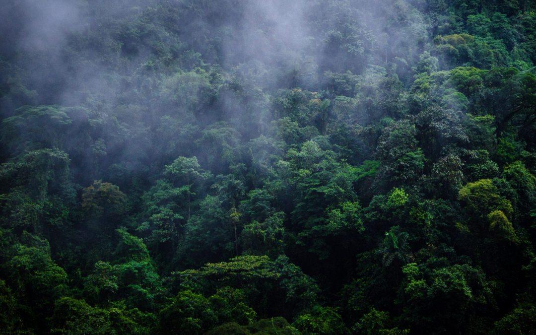 7 actividades para aprovechar el Día Mundial del Medio Ambiente