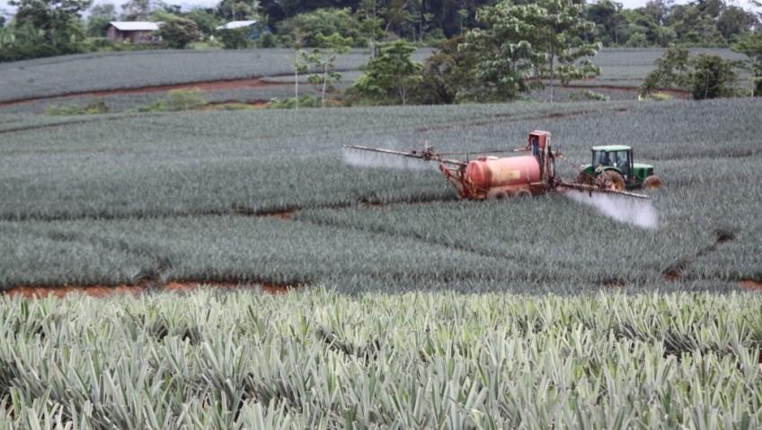 Costa Rica es el consumidor más voraz de plaguicidas en el mundo