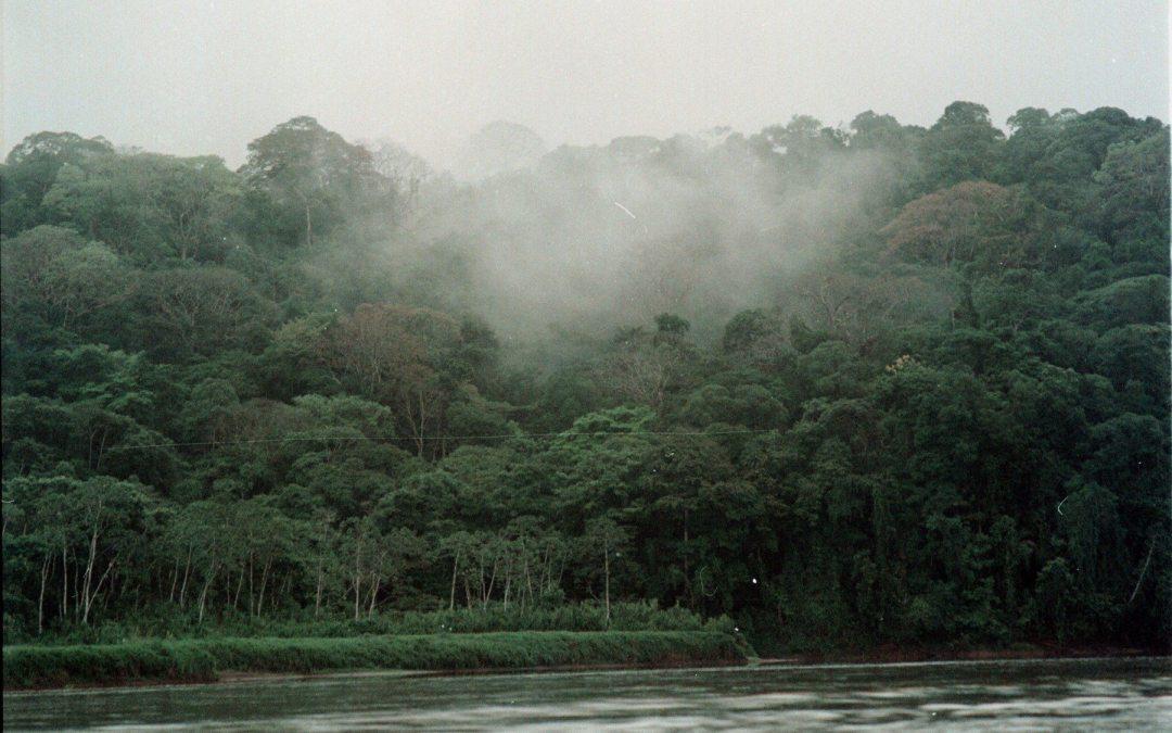 Mientras América Latina deforestaba, Costa Rica ganó bosque. ¿Por qué?