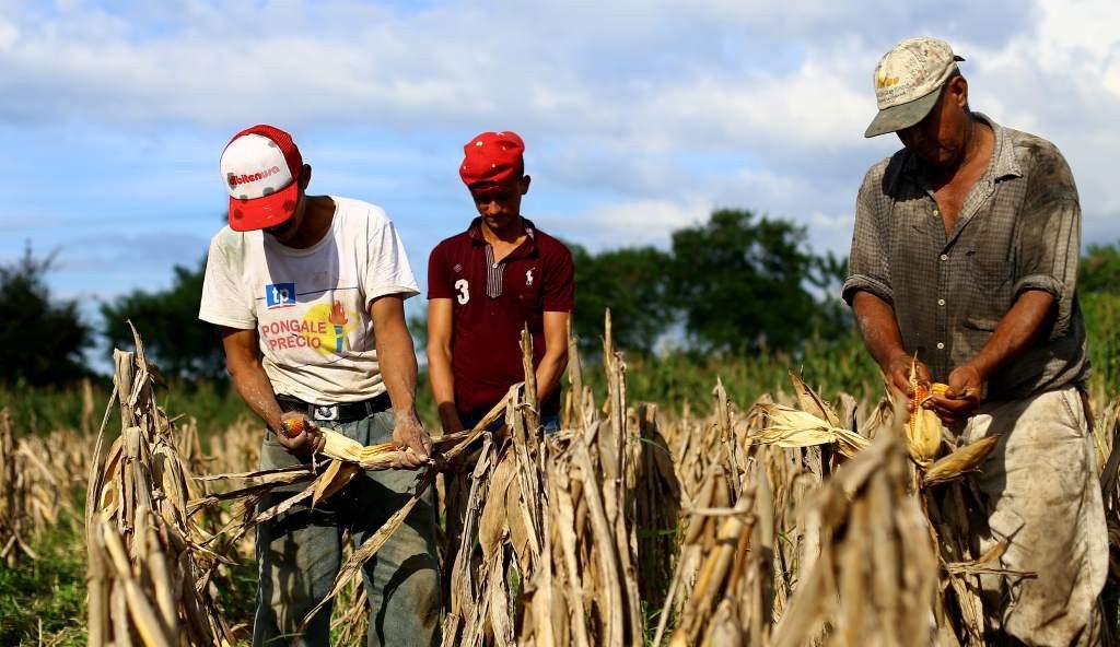 Sequía y plaga por cambio climático agravan el hambre en Honduras