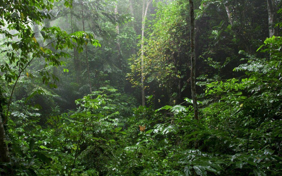 El cambio climático podría secar los bosques lluviosos de Centroamérica. ¿Y luego?