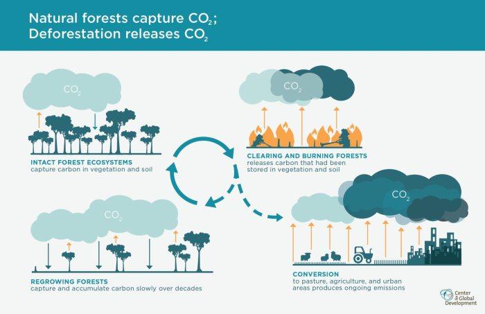 Los bosques capturan el dióxido de carbono que perjudica la atmósfera. Al perder cobertura boscosa este compuesto se libera al aire.