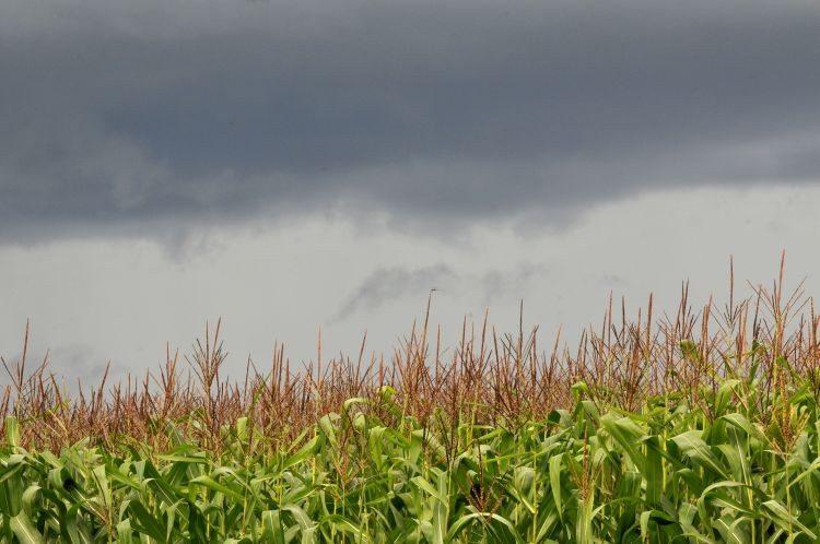 """Las plantas que """"reviven"""": esperanza ante la sequía"""