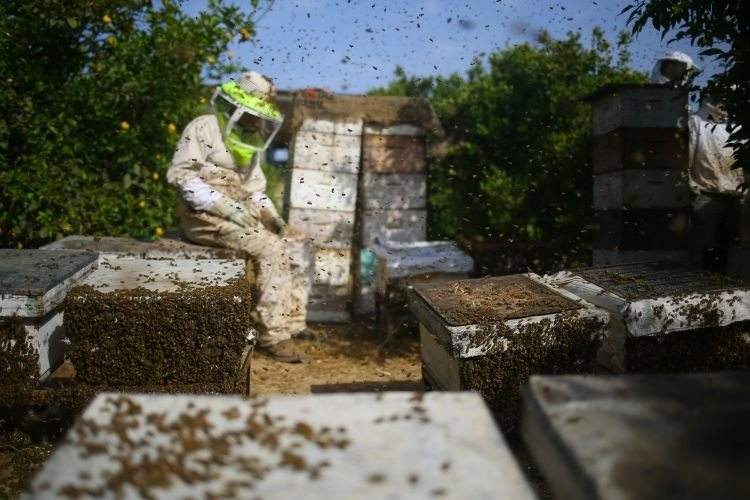 El cambio climático amenaza la miel, pero los apicultores no se dan por vencidos