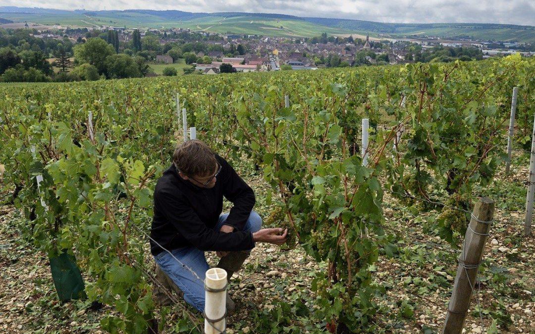 Productores de vino de todo el mundo llaman a unidad frente al cambio climático