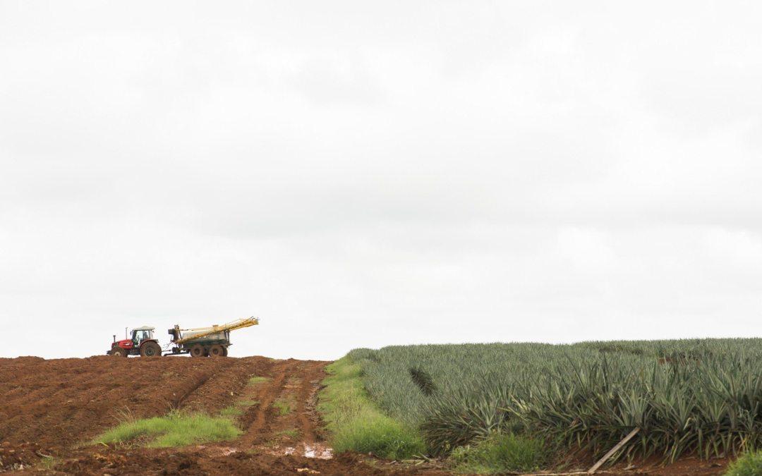 ¿Podrá la contaminación piñera en Zona Norte y Caño Negro afectar la lucha contra el cambio climático? Cultivo de piña quiebra los escudos contra cambio climático