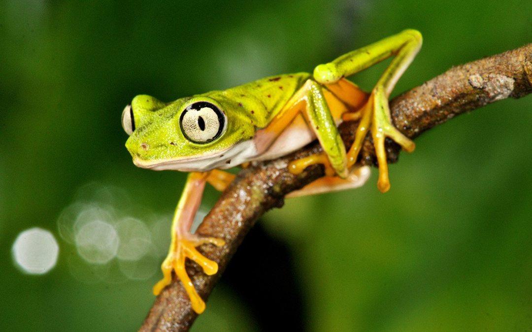 El renacer de los anfibios