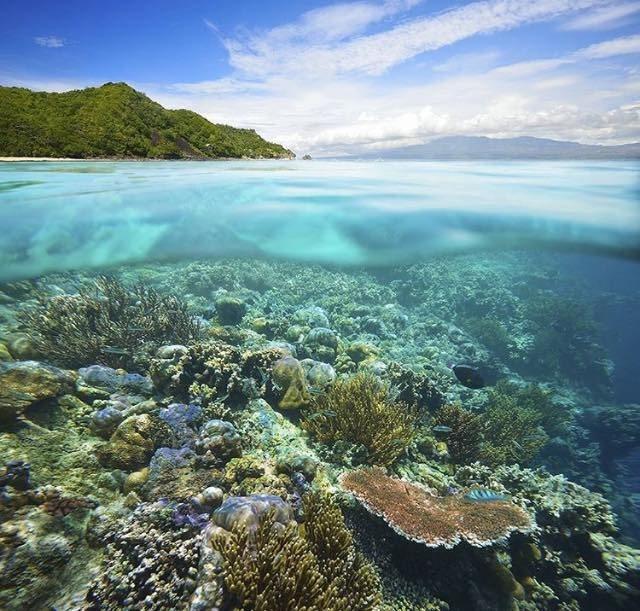 Blanqueamiento de corales es ahora cinco veces más frecuente por calentamiento global