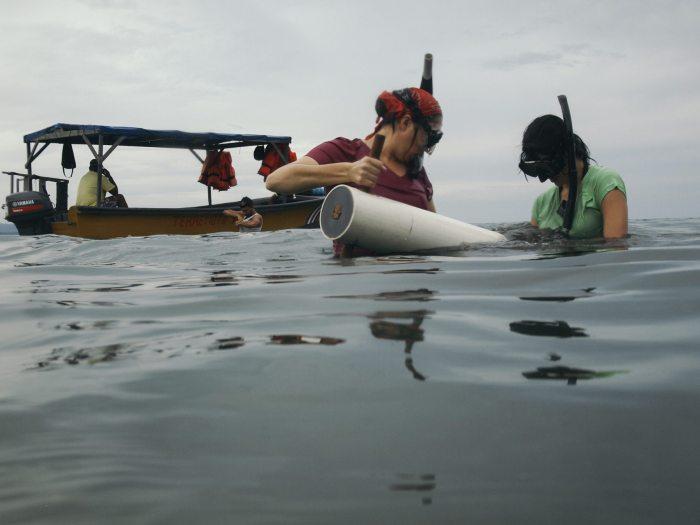 La bióloga Jimena Samper y su asistente, Mariana Cullel, extraen sedimentos de una pradera de pastos marinos en el Parque Nacional Cahuita, en Limón, para analizar su contenido de carbono.